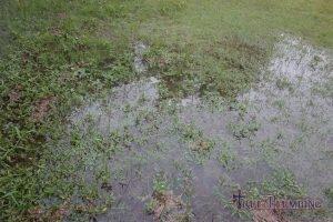 Sewage Flooding Backyard
